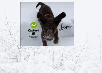 jasper (5)