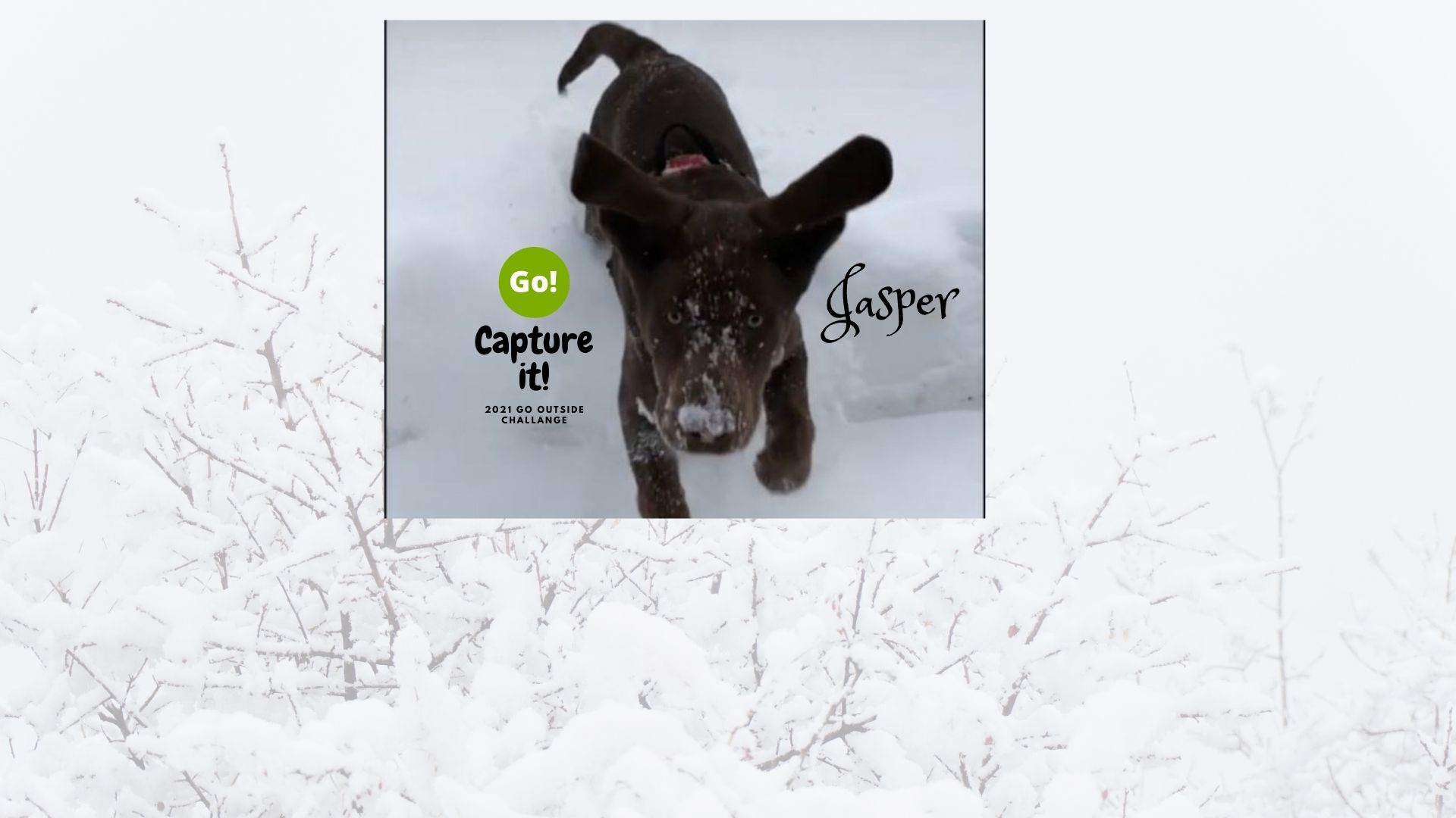 2021 Go Outside Challenge With Jasper – +3 Prize Points