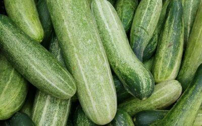 Cucumber Mint Salad